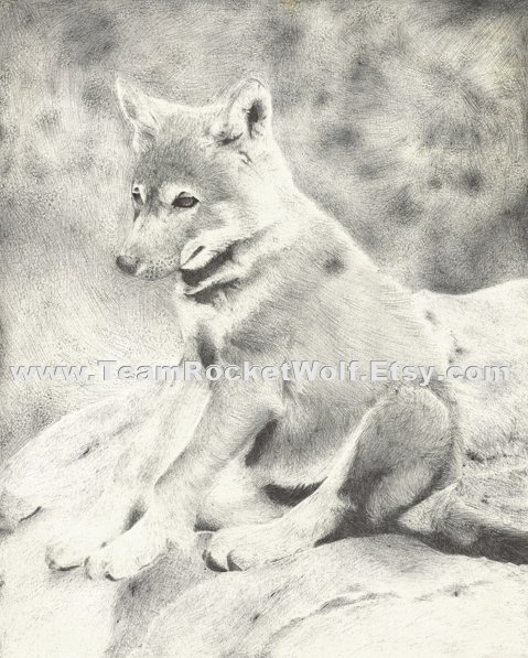 Wolf Puppy. by WolfJayden