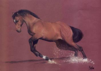 Horse by PepiGonzalez