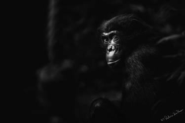 monkey business 2 by radicszoltan