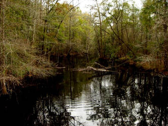 Down home swamp by WLM8288