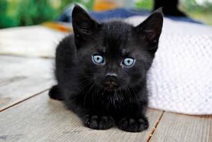 kitty kitty by dziubianu