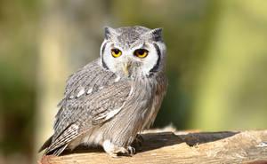 Owl by 19oldman56