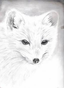 An Arctic Fox
