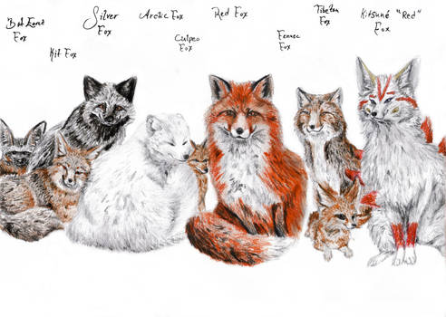 A Bunch of Types of Foxes
