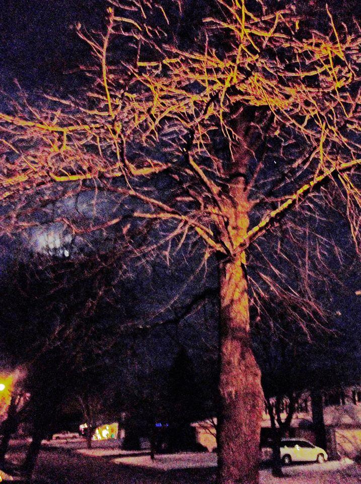 Street Tree by AlleywayNightscholar