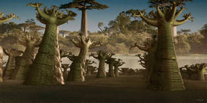 Baobabs along the river