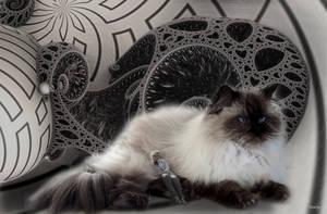 My giant cuddling cat by marijeberting