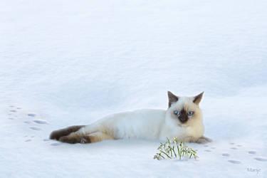 Luna adores snowdrops ... by marijeberting