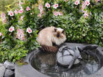 Lizzy and the lizards on the water bowl by marijeberting