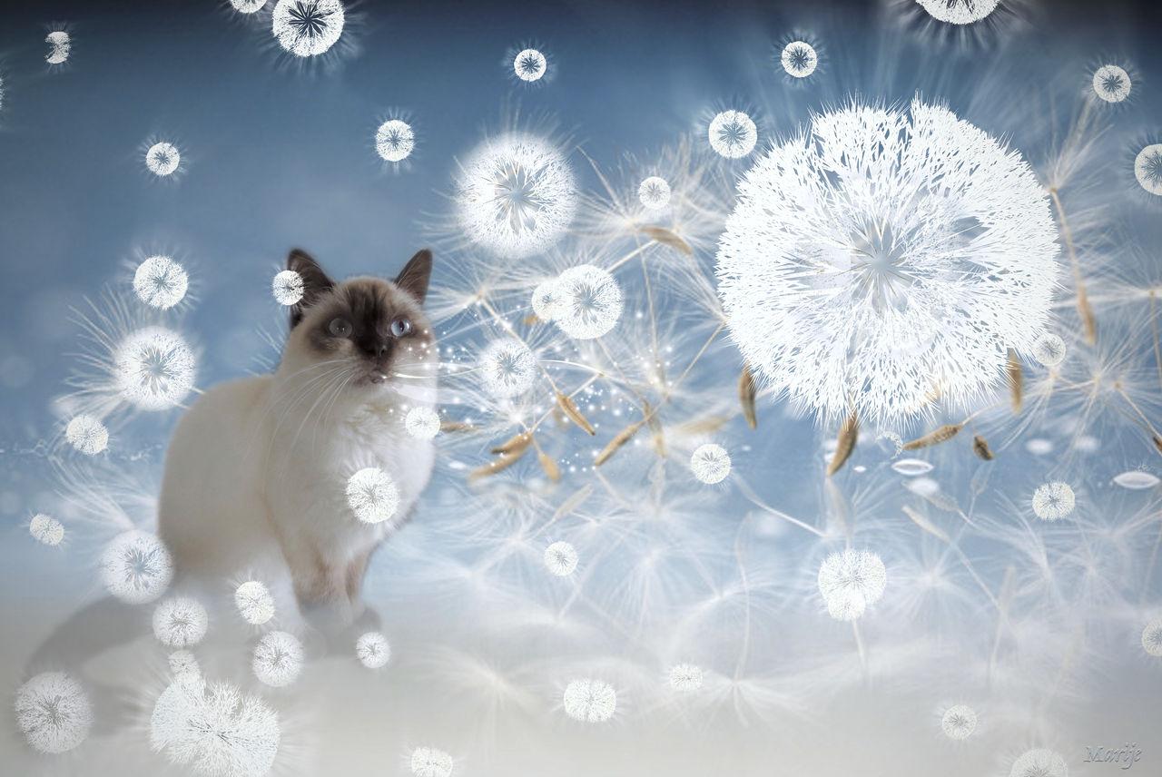 Luna is blowing dandelions ...