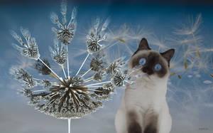 The dandelion is tickling under Luna's nose ... by marijeberting