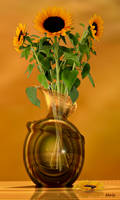 Sunflowers in glass vase ...