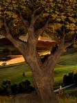 Oak at sunset ...