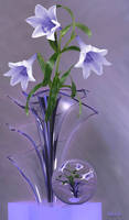 Lilies in glass vase ...