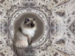 Lizzy, my ragdoll cat