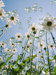 Raindrops and sunshine on my daisies ...