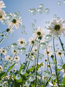 Raindrops and sunshine on my daisies ...