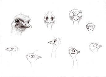 Ostriches by adpdl