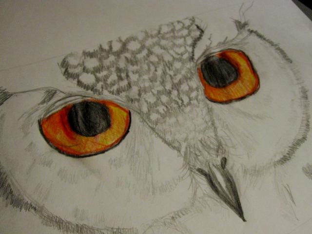 My Owl Drawing by WickedOwl514