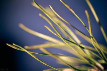Pine Needles by WickedOwl514