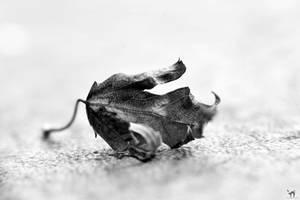Tiny Leaf by WickedOwl514