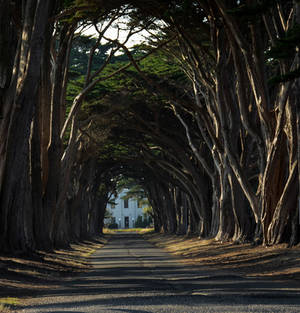 Cypress Tree Tunnel by WickedOwl514