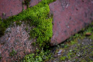 Mossy Brick by WickedOwl514