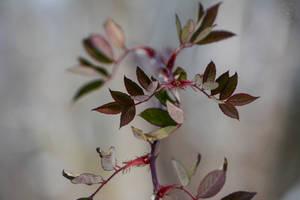 Winter Plants by WickedOwl514