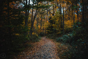 Autumn at Rockwood Park by WickedOwl514