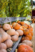 Picking Pumpkins by WickedOwl514