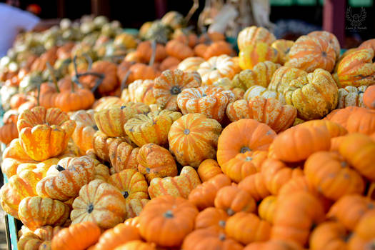 All The Little Pumpkins and Gourds