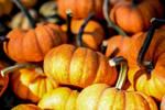 Cute Lil' Pumpkins