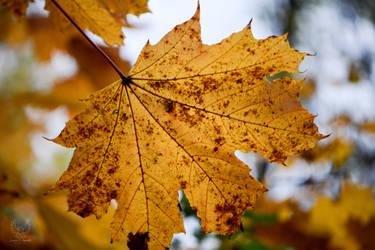 Autumn Leaves (2015)- Muttontown Preserve