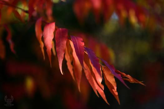 Autumn Colours (2020)