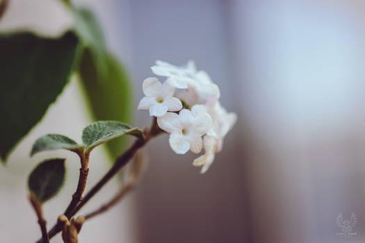 Born In Spring