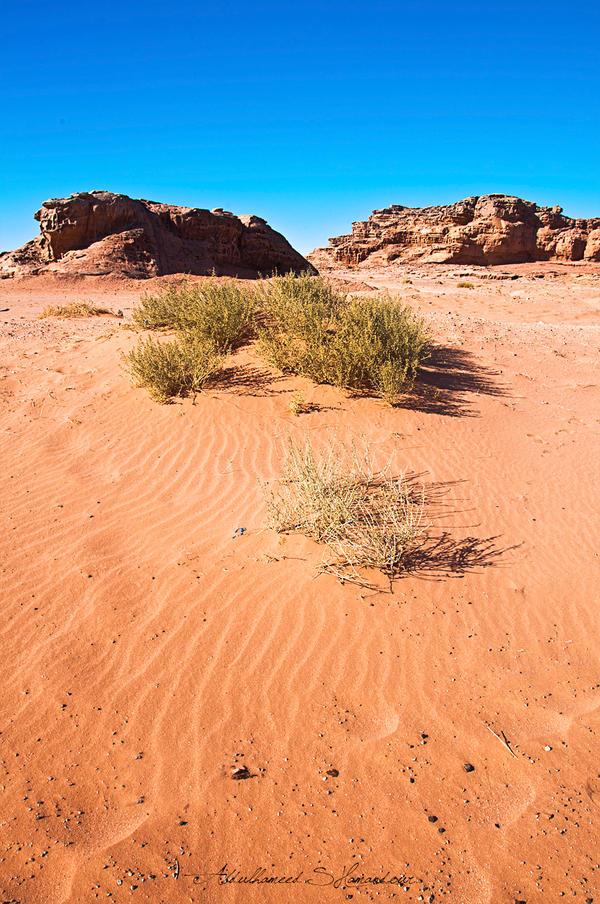Wadi Rum by ashamandour