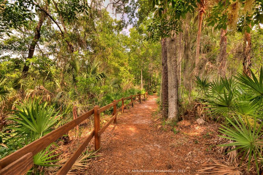 Hillsborough River State Park By Ashamandour On DeviantArt