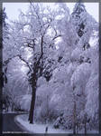 another winter tree
