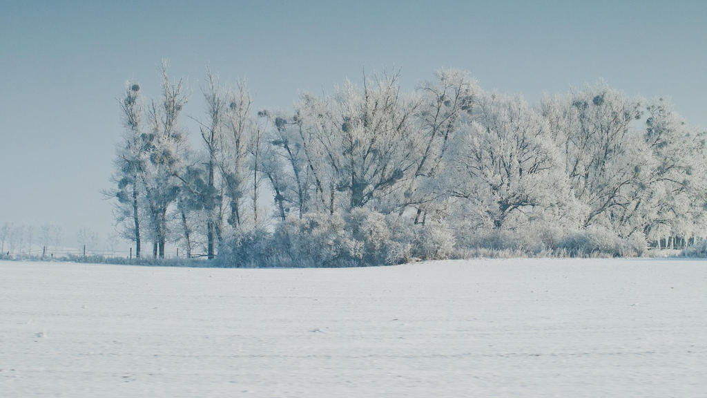 Winter Trees 1080p Wall by BSOD90 on DeviantArt