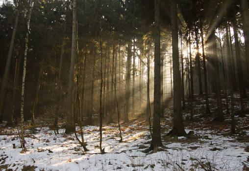 Winter Sunrays