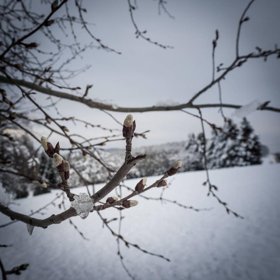 winter willow catkin by BSOD90