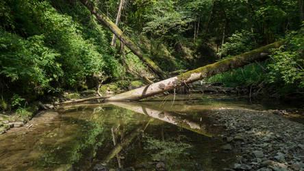 Brook valley