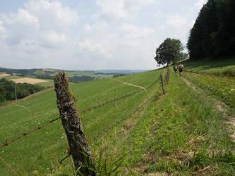 Meadow Path by BSOD90