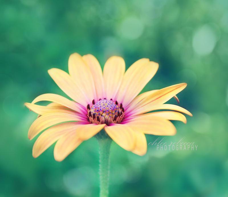 You are my sunshine by chloe-rebecca