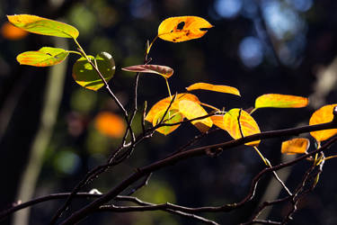 The colours of autumn by TramwayPhotography