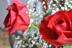 Roses by MatsuKami