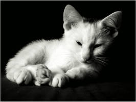 White and Black Kitty by Elin-Lintu