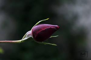 flower by 2m5