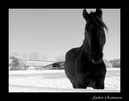 Snow Horse by Headbanginbat13