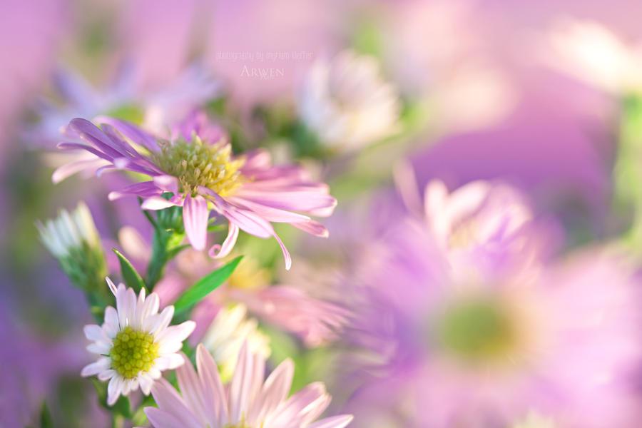 spring spirit by tiphs - photo #39